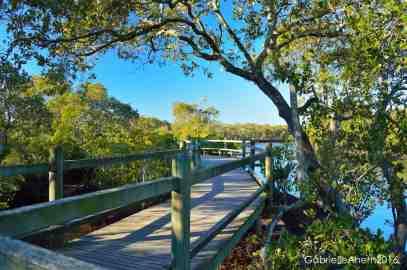 Mangrove Walk