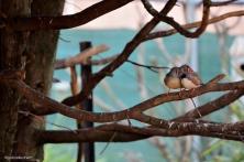 WalkIn Aviary