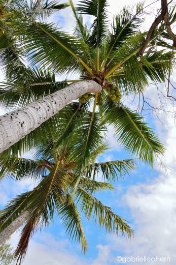Palm Trees, Long Island