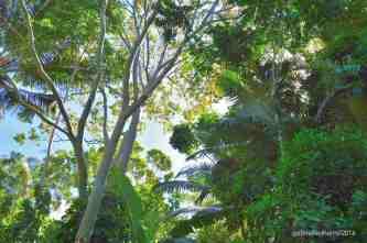 Kuranda Forest